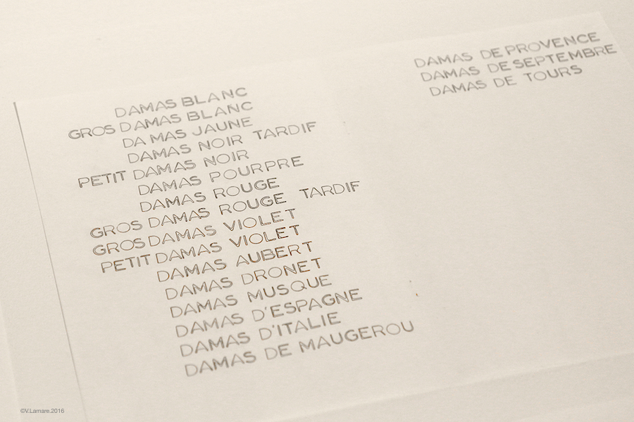 pourdesprunes2016-liste2damas